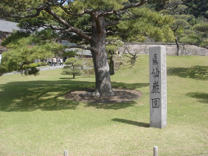 松ノ木.jpg